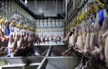 ثبات نسبی قیمت در بازار/ نرخ مرغ به ۷۶۵۰ تومان رسید