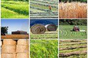 کشاورزی بخش تعاون زیر ذره بین آمار