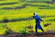 کشاورزی در صدر رشتههای اشتغالزا /جلوگیری کشاورزی از خروج ارز