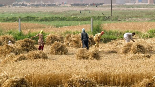 نرخ بیکاری در روستاهای کشور ۲ درصد کاهش یافت