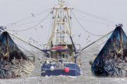 کشتیهای چینی همچنان نان صیادان ایرانی را آجر میکنند