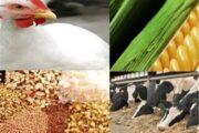 پیشنهاد حذف اختصاص ذرت و سویا به مرغداران و جایگزینی خوراک آماده