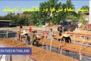 سهم تعاونیها در اقتصاد تایلند